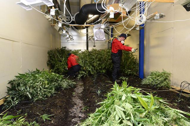 Hoofddorp: Politie ontmanteld diverse hennepplantages